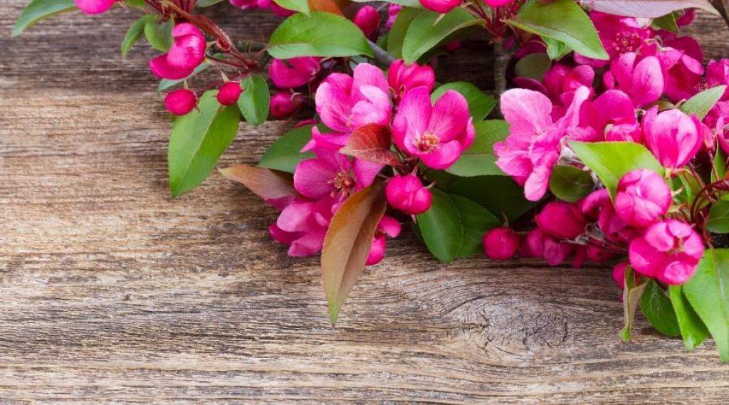 wood floor garden 1024x569 1